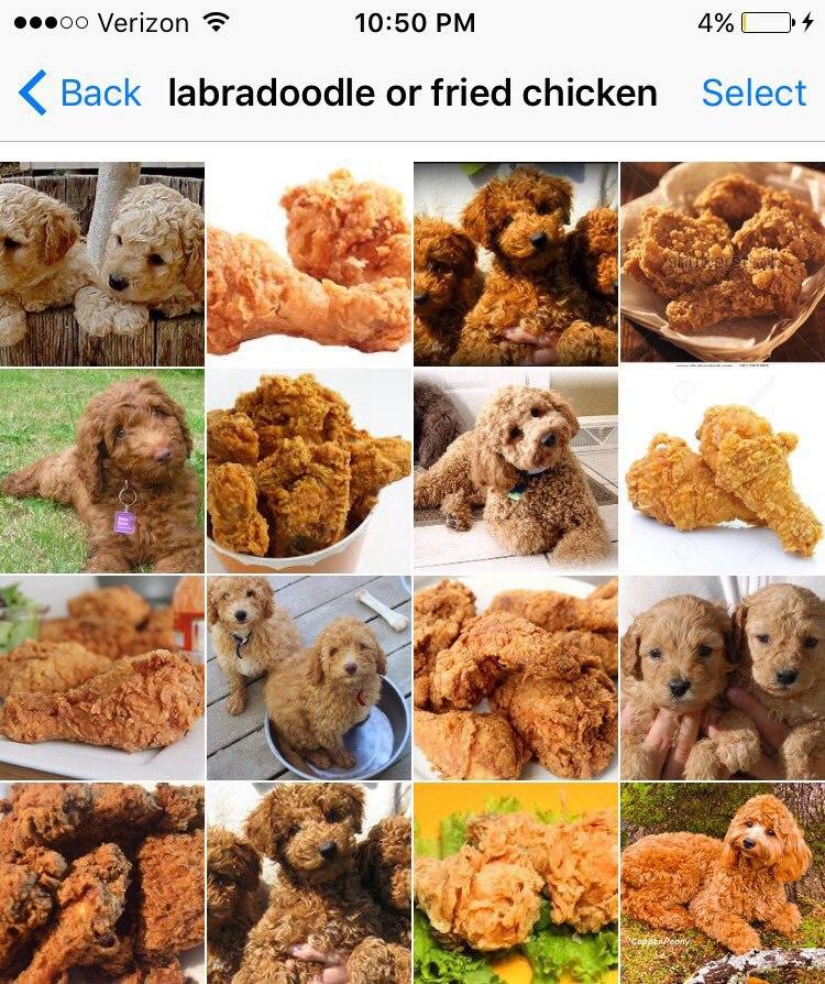 Bagel Dog Puppies